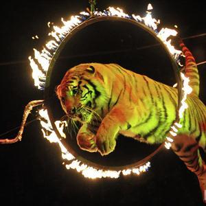 Цирки Кинешмы