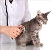 Ветеринарные клиники в Кинешме